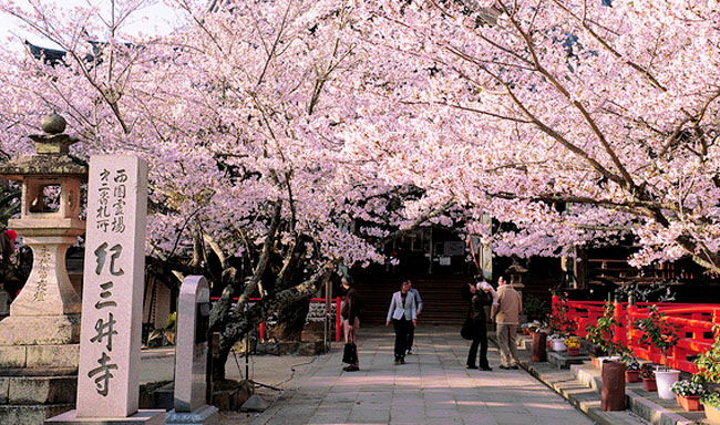 京都|二条城