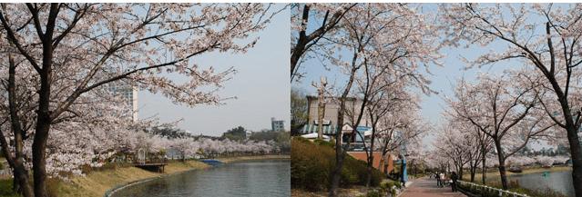 首爾 | 石村湖