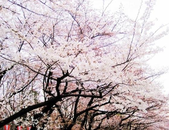 大阪|濱寺公園
