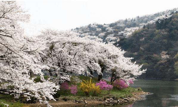京畿道 | 首爾大公園、水原華城、南漢山城