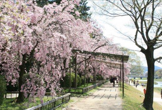 京都|半木之道