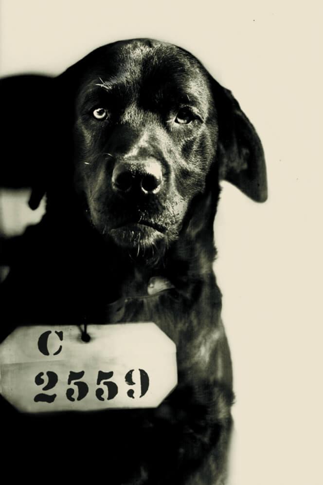 被收押的狗