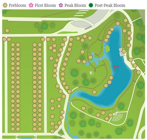 美國紐約布魯克林植物園櫻花季