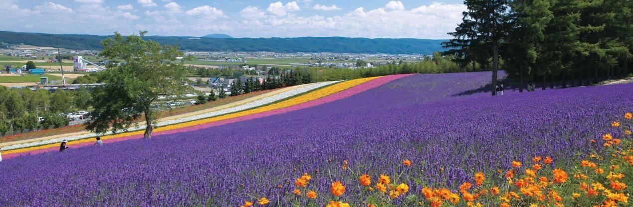 北海道➠富田農場
