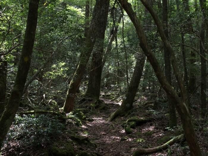 青木原樹海 – 自殺森林
