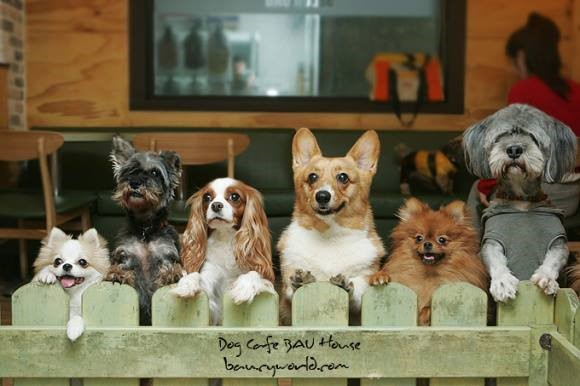 BAU HOUSE Dog Café