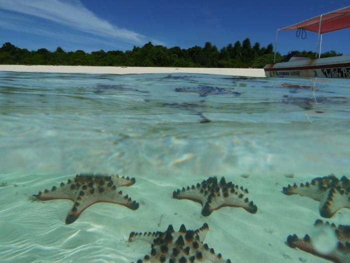 海星島(Starfish Island)