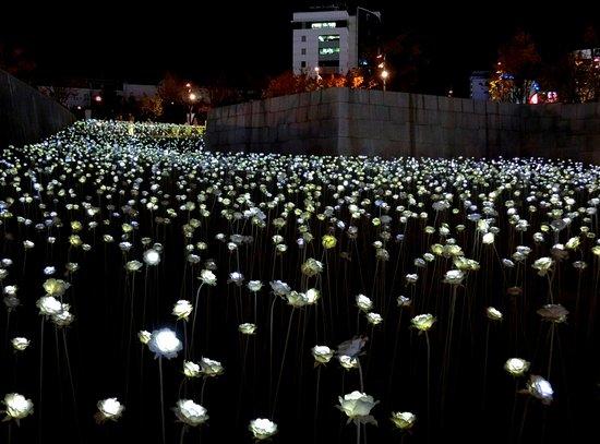 東大門設計廣場LED玫瑰園