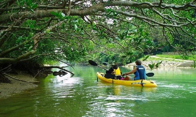 紅樹林獨木舟
