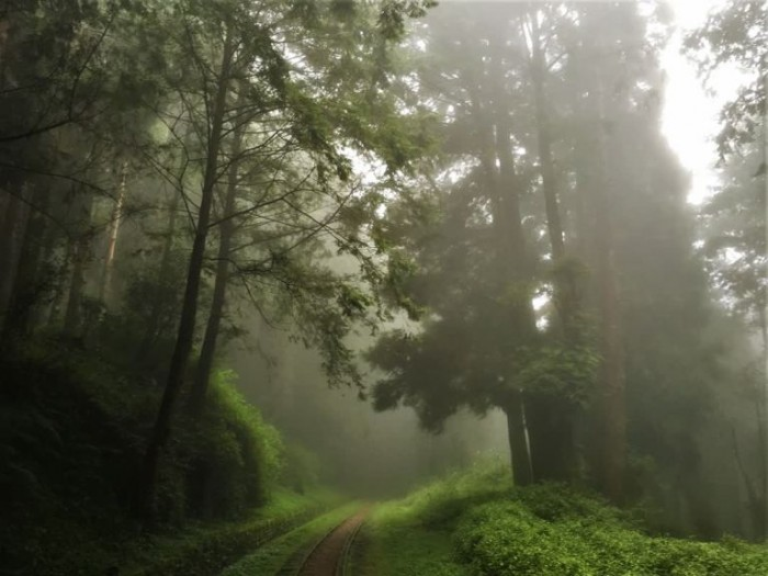 水山巨木林道