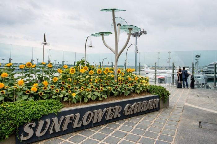 世界最佳機場-樟宜機場 (Changi Airport)
