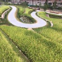 taoyuan-park